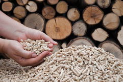 Pelllets- biomass. Oak pellets in female hands- selective focus on the heap, stock photo Royalty Free Stock Photography