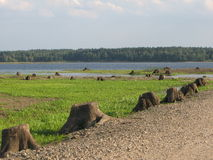 Pelo beira-rio Foto de Stock