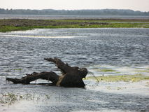Pelo beira-rio Foto de Stock Royalty Free