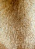 Pelo de perro Foto de archivo libre de regalías