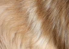 Pelo de perro Imagen de archivo libre de regalías