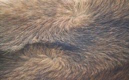 Pelo de perro Fotografía de archivo