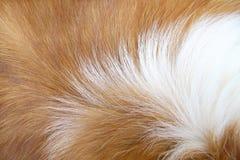 Pelo de perro macro Fotos de archivo libres de regalías
