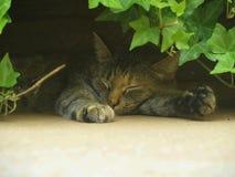 Pelo del gatto Immagini Stock