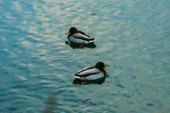Pelo lago Imagem de Stock Royalty Free