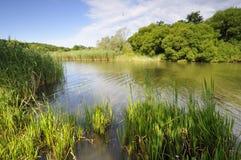 Pelo lago Imagens de Stock