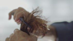 Pelo mojado de Combing Female Brunette del peluquero almacen de video