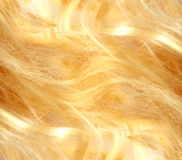 Pelo rubio Textura del pelo rubio Foto de archivo libre de regalías