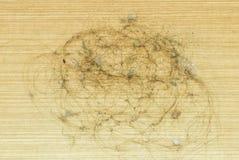 Pelo y polvo sucios de la alopecia en piso laminado imagen de archivo