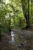 Pelorus Bridge Scenic Reserve in New Zealand Royalty Free Stock Photo