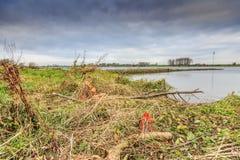 Pelos castores mordidos árvores na zona sujeita a inundações ao longo dos leks holandeses do rio Imagens de Stock