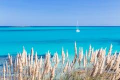 Pelosa plaża, Sardinia, Włochy Zdjęcie Royalty Free