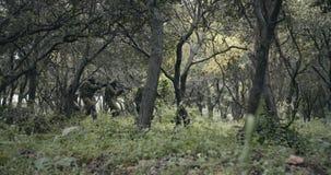 Pelot?n de soldados completamente armados del comando durante combate en un paisaje del bosque almacen de metraje de vídeo