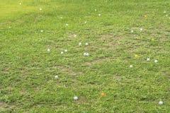 Pelota de golf en el áspero Imágenes de archivo libres de regalías