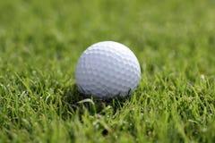 Pelota de golf en hierba imagen de archivo libre de regalías