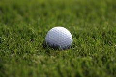 Pelota de golf en hierba Imagenes de archivo