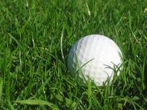Pelota de golf en hierba foto de archivo libre de regalías