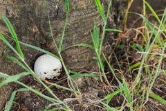 Pelota de golf en la base del árbol Imagen de archivo