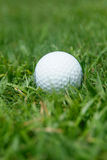 Pelota de golf en la hierba Imágenes de archivo libres de regalías