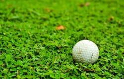 Pelota de golf en roungh verde Imágenes de archivo libres de regalías