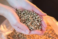 Pelota de madeira natural para aquecer-se nas mãos das mulheres, bio combustível imagem de stock royalty free