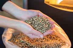 Pelota de madeira natural para aquecer-se nas mãos das mulheres, bio combustível fotografia de stock royalty free