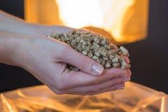 Pelota de madeira natural para aquecer-se nas mãos das mulheres, bio combustível foto de stock royalty free
