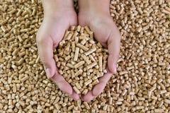 Pelotillas de madera en manos femeninas Combustibles biológicos Combustible biológico alternativo Fotos de archivo