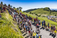 The Peloton on Col du Grand Colombier - Tour de France 2016 Stock Images