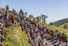 The Peloton on Col du Grand Colombier - Tour de France 2016. Col du Grand Colombier,France - July 17, 2016: The peloton riding on the road to Col du Grand Royalty Free Stock Photography
