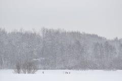 Peloton des deers d'oeufs de poisson dans l'hiver Photographie stock libre de droits