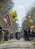 The Peloton in The Forest of Arenberg- Paris Roubaix 2015 stock image
