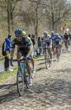 The Peloton in The Forest of Arenberg- Paris Roubaix 2015. Trouee d`Arenberg,France - April 12,2015: The British cyclist Andrew Fenn of Team Sky riding in the Stock Photos
