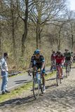 The Peloton in The Forest of Arenberg- Paris Roubaix 2015 royalty free stock photos