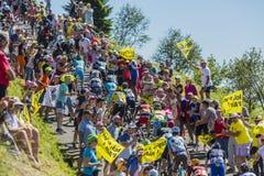 Peloton op Col. du Grand Colombier - Ronde van Frankrijk 2016 Stock Foto