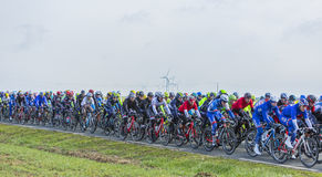 The Peloton - Paris-Nice 2016 Royalty Free Stock Photo