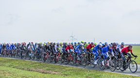 The Peloton - Paris-Nice 2016 Stock Images