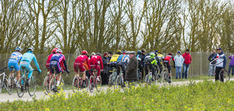 The Peloton - Paris-Nice 2016 Stock Photography