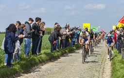 The Peloton- Paris Roubaix 2014 Stock Photography