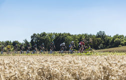 The Peloton in the Plain - Tour de France 2016. Saint-Quentin-Fallavier,France - July 16, 2016: The leading part of the peloton including Team Sky protecting Royalty Free Stock Image