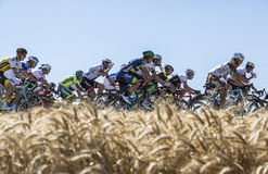 The Peloton in the Plain - Tour de France 2016. Saint-Quentin-Fallavier,France - July 16, 2016: The peloton riding in a wheat plain during the stage 14 of Tour Royalty Free Stock Photo