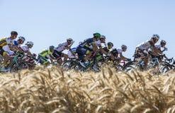 The Peloton in the Plain - Tour de France 2016 Royalty Free Stock Photo