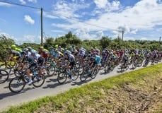 The Peloton - Tour de France 2016 Stock Photography