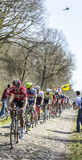 Pelotonen i skogen av Arenberg- Paris Roubaix 2015 Royaltyfri Foto