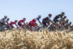 Pelotonen i slätten - Tour de France 2016 Fotografering för Bildbyråer