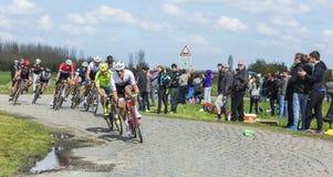 Pelotonen - Paris Roubaix 2016 Royaltyfria Foton