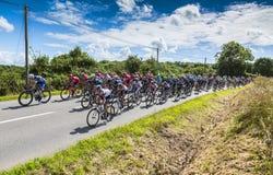 Pelotonen - Tour de France 2016 Arkivfoto
