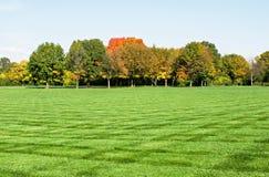 Pelouse avec des arbres d'automne Photographie stock libre de droits