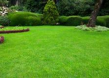 Pelouse, beau jardin d'herbe verte images stock