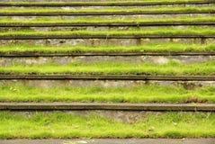 Pelouse d'herbe avec des opérations image stock